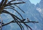 Birds at Grand Tetons