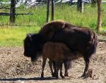 Yellowstone National Park, Wyoming 2005