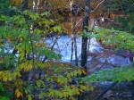Cascade Park Falls, NH