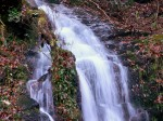 Great Smoky Mountain National Park, NC