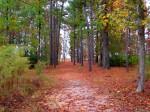 Historic Jamestown, Colonial National Historic Park