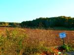 Cranberry Bog, West Yarmouth MA