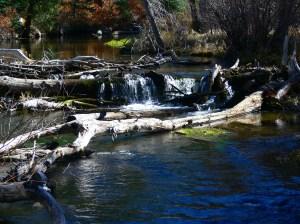Cimarron State Park, New Mexico