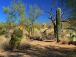 Saguaro National Park East, Arizona