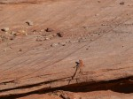 Antelope House Overlook, Canyon de Chelly National Monument