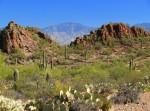 Saguaro National Park West, Arizona