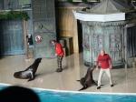 Clyde & Seymour Show, SeaWorld San Antonio TX