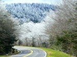 Clingman's Dome Road, Great Smoky Mountains National Park - North Carolina