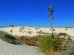 Interdune Boardwalk, White Sands National Monument NM