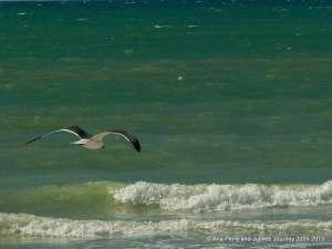 Seagull, FL 1 (2)