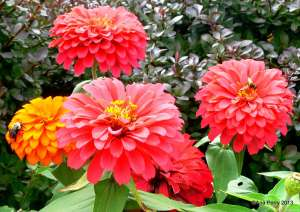 warsaw gardens 8.7.13 142