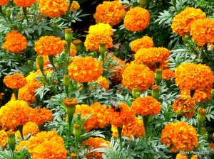 warsaw gardens 8.7.13 231