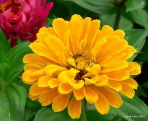 warsaw gardens 8.7.13 320