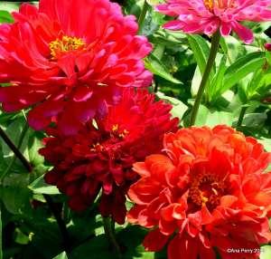 warsaw gardens 8.7.13 340